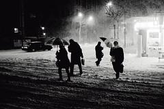 Minami-Aoyama. (Davide Filippini ) Tags: schnee winter people blackandwhite bw snow monochrome japan tokyo blackwhite hiver nieve nevada streetphotography tquio neve   invierno neige japo snowfall umbrellas  inverno   japon giappone nevicata  tokio  nogizaka japn nevasca  schneefall   minamiaoyama       tokyomonochrome japanblackandwhite chutedeneige davidefilippini japanstreetphotography tokyostreetphotography japanmonochrome tokyoblackandwhite fujifilmx100