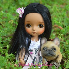 friends (French Bulldog Works) Tags: pink brown flower cute green alpaca girl grass yellow dark hair puppy french doll little tan fair bulldog wig tiny mohair owl hawaiian frenchie bjd custom bully beings abjd haru jointed hawaiin balljointed latidoll balljoint lati dollwig fairbeings