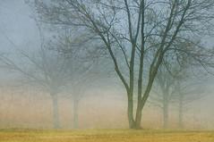 Morning Fog at the Park (jeanineleech) Tags: park morning trees winter usa mist tree fog spring mood pennsylvania foggy atmosphere southpark