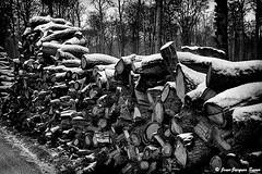 0294 - Fort d'Hardelot, 1973 (ikaune) Tags: blackandwhite bw monochrome noiretblanc nb neige coupe bois argentique hardelot argentic ikaune