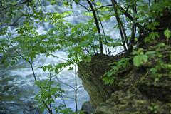 Minnehaha Creek (Bolobilly) Tags: park minnesota flora minneapolis mpls twincities mn minnehaha minnehahacreek