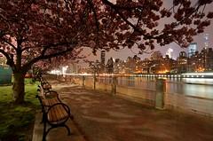 Roosevelt Island, 04.22.16 (gigi_nyc) Tags: nyc newyorkcity spring newyorkskyline cherryblossoms rooseveltisland springflowers nycskyline
