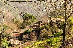 Vaqueirinho shale village (Alfredo Mateus Photography) Tags: trees mountain tree portugal stone forest woods village natue shale lousa schist vaqueirinho