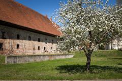 1X4A7226 (Andreas Kobs) Tags: sonne brandenburg kloster backstein lehnin