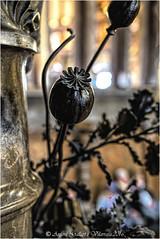 Flor d'opi. (Primer Premi - 1er Concurs Palau Gell - Barcelona). (Antoni Gallart i Vilarrasa) Tags: barcelona flower flora iron flor contest palace catalonia prize concurso catalunya guell opium palau palacio gell d800 premio ferro opio hierro concurs cero premi
