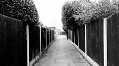 A Passage in Suburbia. (ManOfYorkshire) Tags: trees urban blackandwhite bw contrast fence private concrete wooden pavement stones suburbia flags foliage alleyway paving fencing panels posts passage privacy lining passageway doncaster snicket lined blacandwhite shurbs cutthrough bessacarr stoopslane