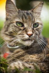Tameka (Ryan1394) Tags: portrait cute green love animal cat canon eyes adorable whiskers tortoiseshellcat 60mm tamron
