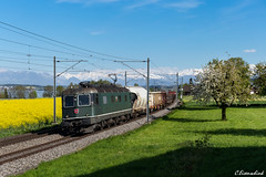 SBB Re 6/6 11646 bei Nottwil (TheKnaeggebrot) Tags: train see sbb cargo ffs 620 gterzug cff re66 11646 nottwil sempacher