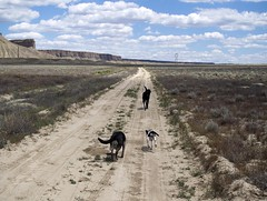 kick up yer heels! (sage and spirit) Tags: dogs highdesert lucky dirtroad durango pinto rezdogs wildponyroad