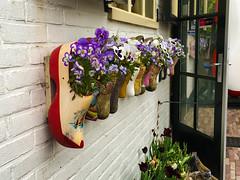 Flowers (58lilu58) Tags: flowers holland nederland clogs fiori marken olanda zoccoli