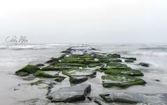 The path out to sea... (calba) Tags: ocean sea water fog landscape newjersey nikon rocks solitude waves path nj peaceful atlantic atlanticcity dreamy algae topaz waterscape slowexposure morningfog nikon2470mmf28g topazsimplify4 cathyalbaphotography cathyalba nikond750