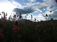 Fiorita (Fraser P) Tags: flowers italy mountains primavera landscape spring umbria castelluccio pianogrande fiorita