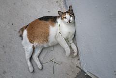 160607 - Manja (y_leong23) Tags: cat dlux