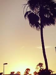 palm (Jes_Sa) Tags: holiday urlaub reisen sonne strand meer gran canaria kanaren kanarische inseln zu hause sommer heis wunderbar landschaft sea ocean