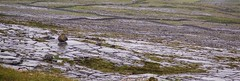 Drystone and wet pavement (Michael Foley Photography) Tags: ireland burren coclare galwaybay