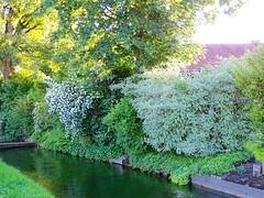 DSC03854 (Mr.J.Martin) Tags: tusslingbavaria bayren germany gapp garden canal village church wildflowers