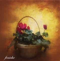 el cesto --basket of flowers (feniche) Tags: wallpaper texture textura landscape flickr comunidadvalenciana magicunicornverybest magicunicornmasterpiece feniche