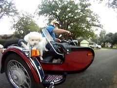 shot0008 (8) (coupe1942) Tags: dusty motorcycle bichon murph murphy sidecar ural cameramount gopro goprocamera barmount hackdog