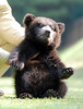 Bear (floridapfe) Tags: bear animal zoo nikon korea everland specanimal onephotomonthsept