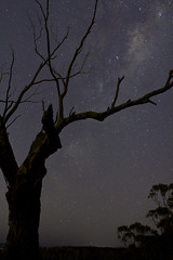 The Milky Way @ Lysterfield (mthomson34) Tags: tree stars astrophotography milkyway lysterfield