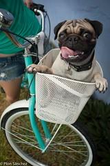 (Ploncito) Tags: bicycle vintage mexico model power ride moda bikes pug bicicleta modelo bici canasta pedal campeche joyeria chavos cleta chirola bicyclelife chilorabikes pedaleame