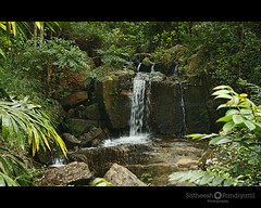 waterfall (Satish Pandiyattil) Tags: forest waterfall kerala bonakkad