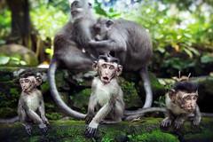 Les singes sont bien trop bons pour que l'homme puisse descendre d'eux. (David Olkarny Photography) Tags: brussels portrait people bw canon 50mm belgium bokeh availablelight bruxelles 50mm14 5d dailypicture alienbee photographe 5dmarkii davidolkarny