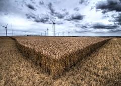 234/365 (TheGriefmeister) Tags: clouds canon grey wheat 7d pro crops 365 tamron turbine hdr cambridgeshire windpower cambs photomatix project365 balsham 1024mm 234365 elementsorganizer