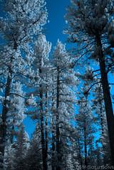 IMGP3969-Edit (blackcloudbrew) Tags: ir tahoe laketahoe pentaxk100ds