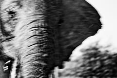 Ay, Masai Mara (leicca) Tags: masaimara quejas
