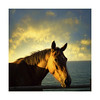 El caballo y el mar (Agur Al) Tags: blue light sky sun luz sol beauty animal azul clouds photoshop caballo atardecer mar nikon amarillo ojos cielo nubes mirada bizkaia belleza paisvasco horizonte fotoarte itsaslur fotocreativa agural