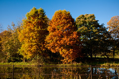 Autumn Trees (juliereynoldsphotography) Tags: autumn trees leaves liverpool reflections croxtethpark juliereynolds