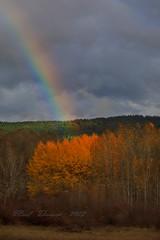 Pot of Gold (paultnature) Tags: trees nature canon landscapes 5d rainbows aspen conboynationalwildliferefuge