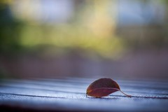 Landed on the table - autumn minimal (icemanphotos) Tags: wood morning autumn sunlight colors table leaf dof bokeh naturallight minimal icemanphotos