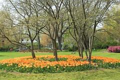 Sherwood Gardens - HTMT! (karma (Karen)) Tags: flowers trees gardens tulips maryland baltimore sherwoodgardens 4spring htmt cmwdorange