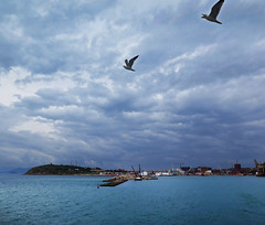 Weekend-time flies (Robyn Hooz) Tags: sea clouds freedom dock nuvole mare seagull porto toscana gabbiani libert