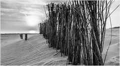 Dutch Coast, Bergen Netherlands (CvK Photography) Tags: sunset blackandwhite bw sun holiday beach nature netherlands monochrome canon landscape coast blackwhite spring europe nederland nl noordholland schoorl monochroom northholland