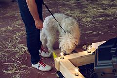 Verdeando Fest Gijón Museo del Pueblo de Asturias Mascotas