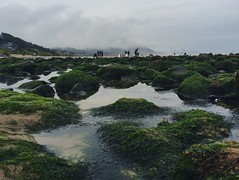Tidepooling (Stephanie Meshke) Tags: ocean beach oregon seaside play adventure explore cannonbeach tidepools