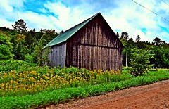 ~ Somewhere Right Off The Beaten Path .... (~ Cindy~) Tags: road flowers green field clouds barn rural gold golden town spring oliver shot time path tennessee country off dirt springs click tupper quick puffy weatheredwood beaten 2016 of