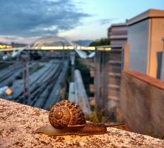 Slow life in Barcelona (Ms. Briongos) Tags: barcelona city bridge light mobile night puente lights luces noche slow snail ciudad catalonia calatrava pont catalunya crepusculo catalua caracol nit anochecer llum llums lent cargol doucement despacio