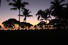 Sunset Silhouette (Brad Discombe) Tags: ocean trees sunset sea holiday beach water silhouette canon landscape palm tropical mauritius sunbeds 100d
