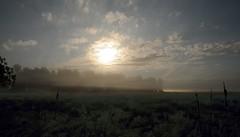 Sonnenaufgang in der Ossenvenne; Norderstapel, Stapelholm (16) (Chironius) Tags: stapelholm norderstapel schleswigholstein deutschland germany allemagne alemania germania    ogie pomie szlezwigholsztyn niemcy pomienie morgendmmerung sonnenaufgang morgengrauen  morgen morning dawn sunrise matin aube mattina alba ochtend dageraad zonsopgang   amanecer morgens dmmerung nebel fog brouillard niebla