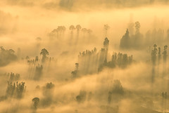 Morning myst atop Gunung Batur (Sean Comiskey) Tags: morning shadow summer bali cloud tree nature forest indonesia landscape photography nikon dusk top indianocean vulcano batur myst 2014 seancomiskey