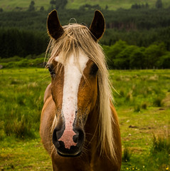 Horse (Brian Travelling Getty Contributor) Tags: horse green animal animals scotland highlands pentax handsome glenorchy pentaxkr