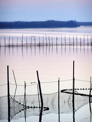 Reflejos (Japo Garca) Tags: vertical lago atardecer mar agua pattern pesca palos horizonte reflejos fotografa serenidad albuferadevalencia japogarca