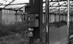 8285.old (Greg.photographie) Tags: old blackandwhite bw film analog 50mm minolta noiretblanc 400 17 xg1 foma rokkor r09