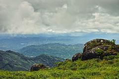 (Mobile/WhatsApp:00919495509009) Tags: india landscape sigma kerala munnar munnarhills