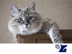 Los gatos no pueden saborear cosas dulces. CLINICA VETERINARIA DEL BOSQUE 1 (tipsparamascotas) Tags: mascotas veterinaria delbosque estticacanina cuidadodemascotas mascotassaludables veterinariadelbosqueveterinariacuidadodemascotasmascotassaludablesesteticacaninaclinicaveterinariadelbosqueespecialistasencuidadodemascotaswwwveterinariadelbosquecomveterinariadelbosque