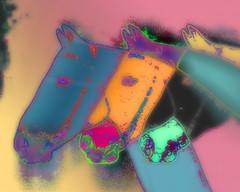 STALLION (sadler0) Tags: horses horse colors photoshop psychedelic stallion photoeffects shockofthenew